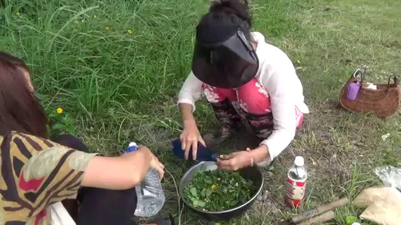 の 作り方 酵素 野草