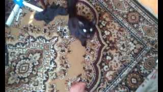 Моя кошка кусает меня за ногу, за то, что просто прохожу рядом с ней