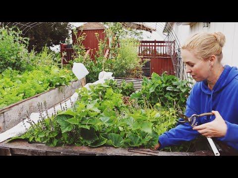 DIY Pallet Greenhouse Build