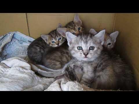 野良の子猫たち カメラが威嚇されました。(笑)