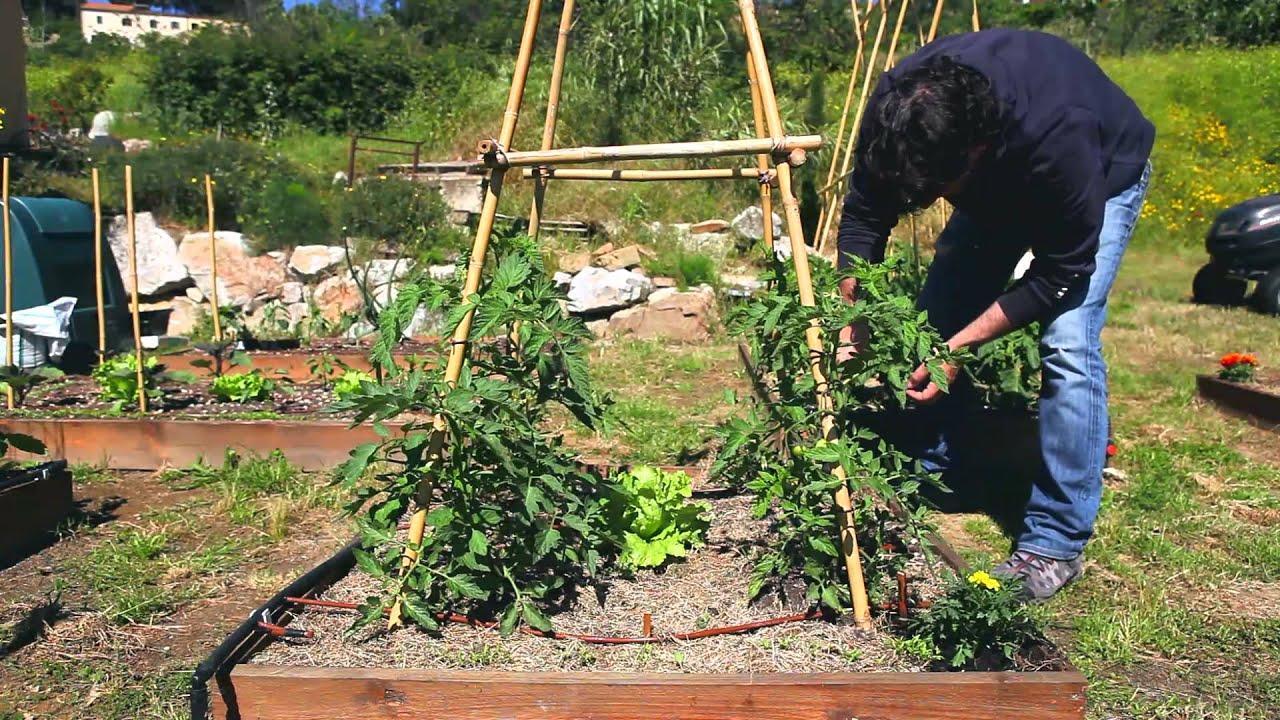 Primo Video Orto Giardino Piantumazione Tageti Youtube