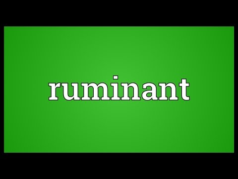 Ruminant Meaning
