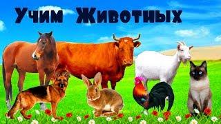Учим животных - ЗВУКИ ЖИВОТНЫХ для детей / Как говорят животные - развивающие мультики для детей