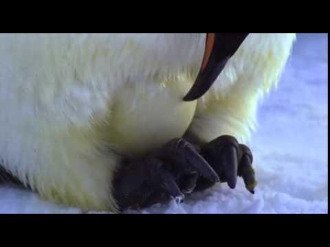 3 chim canh cut giao phoi thay nhau ap