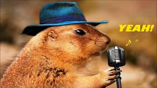 Download The Avener You Belong!ChipmunkX MP3 song and Music Video