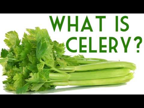 True Meaning Of Celery Breaking Down Celery With The Professor Of