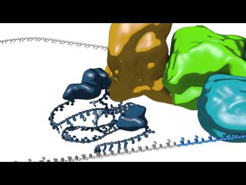 mRNA splicing