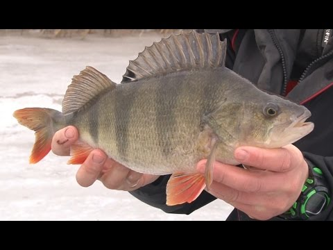 Зимняя рыбалка. Стратегия ловли окуня и плотвы на пруду. О рыбалке всерьёз 304 HD.