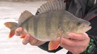 Зимняя рыбалка. Стратегия ловли окуня и плотвы на пруду. О рыбалке всерьёз 304 HD..