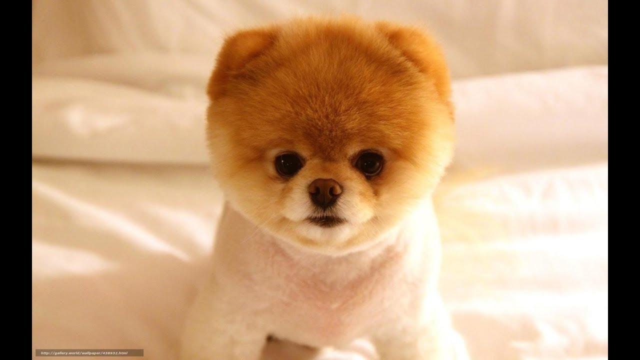 6個世界上最可愛的寵物