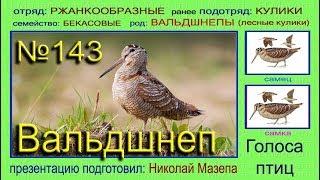 Вальдшнеп. Голоса птиц