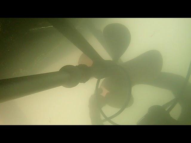 Sea Greene 01/11/19