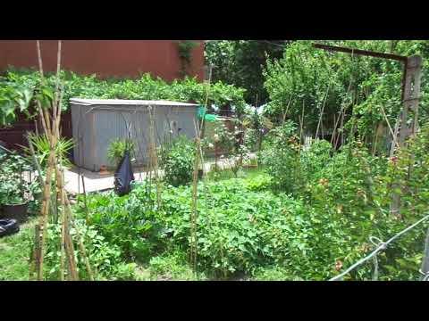 Vegetable Garden By Lake Trasimeno