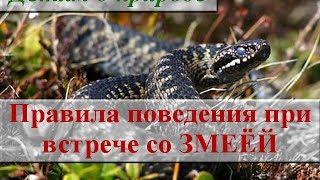 Правила безопасного поведения в лесу ∿ Встреча со змеёй