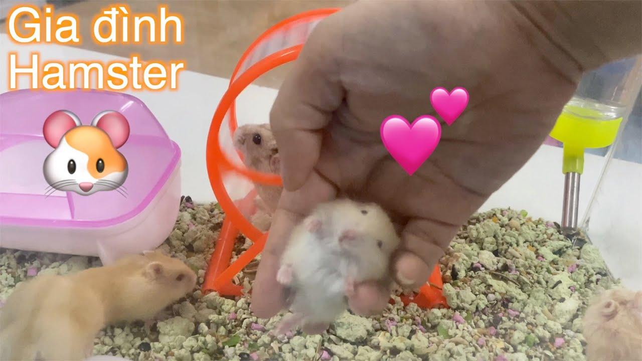 LoHa Pet Shop Thăm gia đình Hamster bị bỏ rơi sau 1 tuần