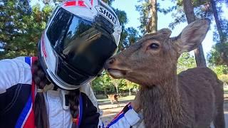 鹿さんに会いに行く。奈良公園編