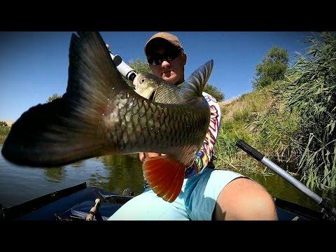 Самые лучшие и уловистые рыболовные приманки для ловли на щуку, на судака, на окуня