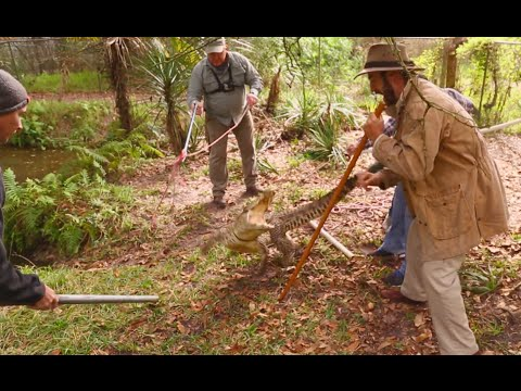 Cuban Crocodile Capture Pt 1! Kamp Kenan S3 Episode 23