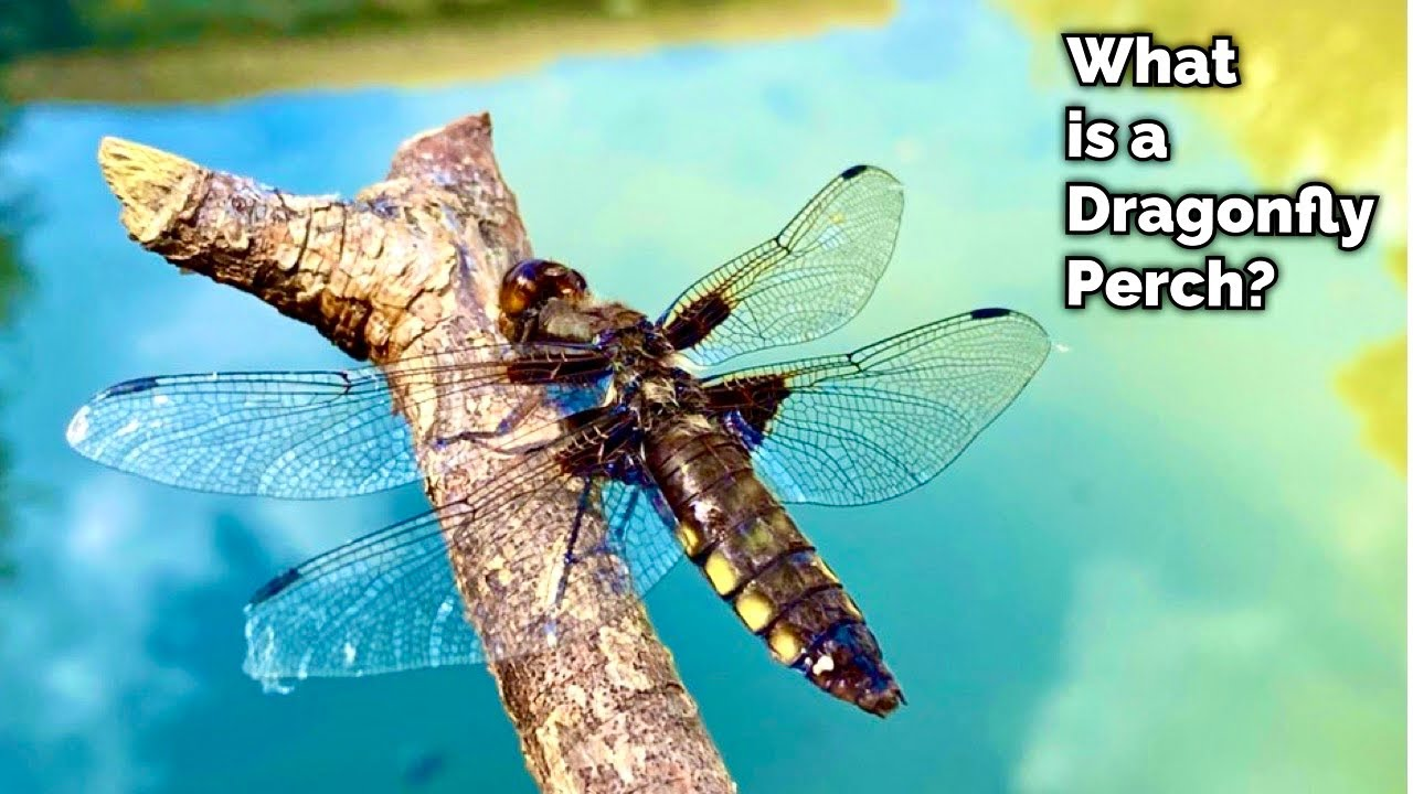 Why You NEED One of These in Your Pond….