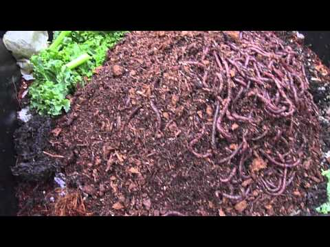 Living Worms From Uncle Jim S Worm Farm You