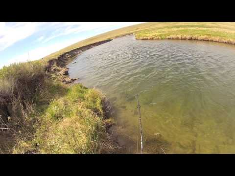 Pike fishing small stream Alberta Candad