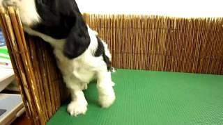 詳しくはhttp://www.pets-hop.com/まで.