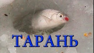 ТАРАНЬ- Подледный лов. Fish sea roach. Рыбалка. Ловля тарани на поплавочную удочку. fishing.