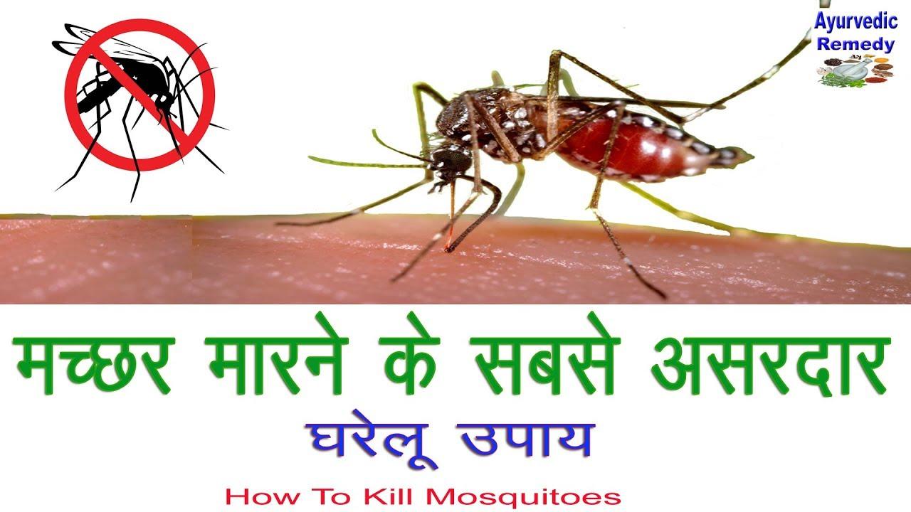 मच्छर मारने के घरेलू उपाय   how to kill mosquitoes ...
