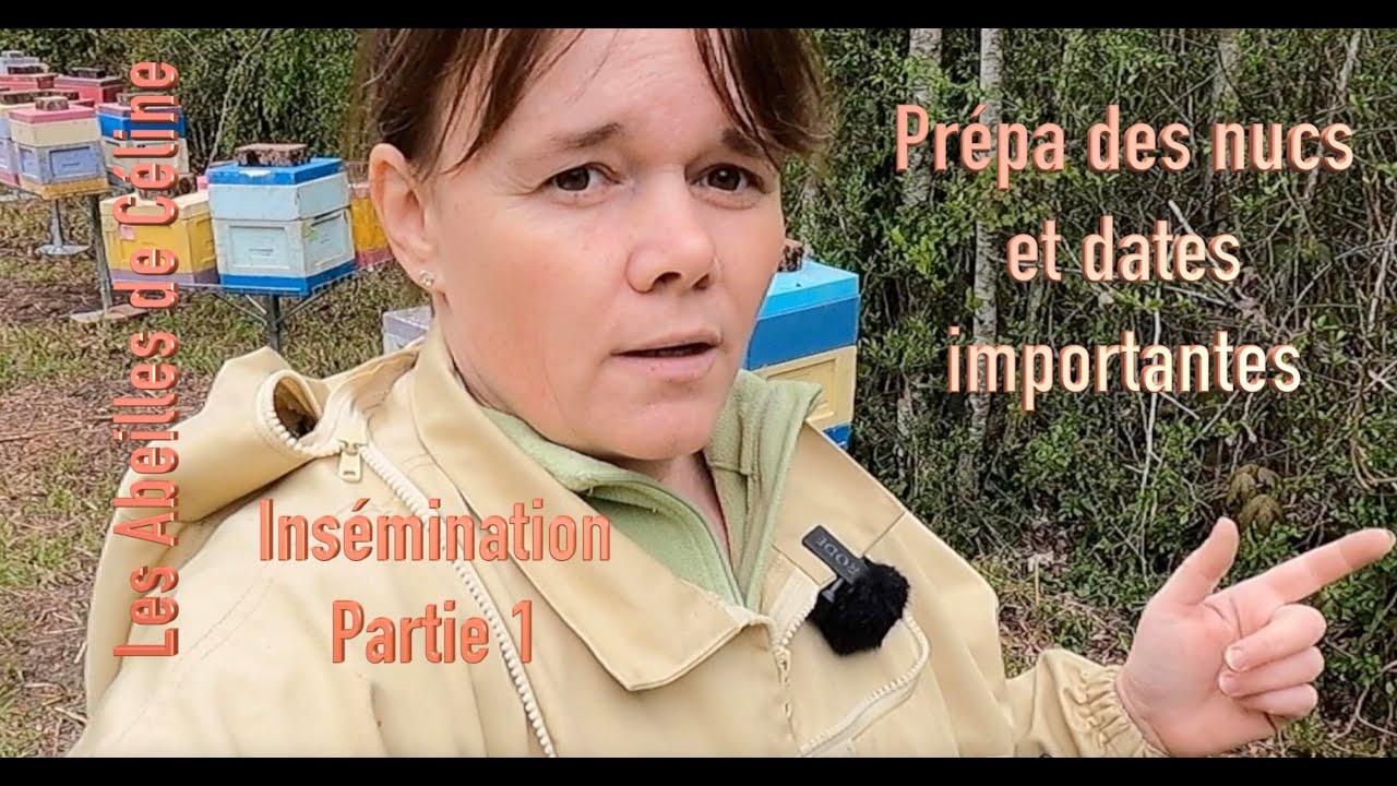 Insémination (partie 1): préparation des nucs et dates importantes à retenir.