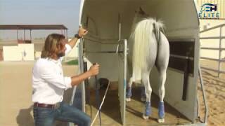 Trailer Loading  How to Fix Anything with Horses presented by Elite Horsemanship