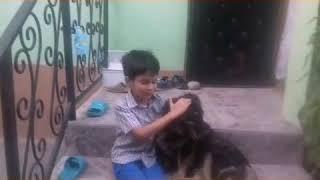Фильм про мальчика и собаку