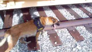 K9 Finds Scentlogix Rdx And Tatp Explosives Aids Hidden On Railway And On Train