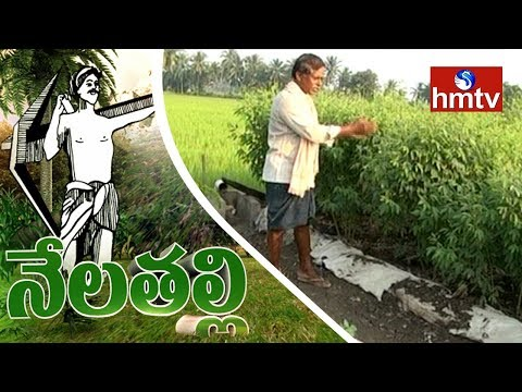 Success Story Of Natural Farming By East Godavari Ideal Farmer | Nela Talli | HMTV