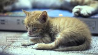 Egyptian funny sleepy kitten HD 1080P