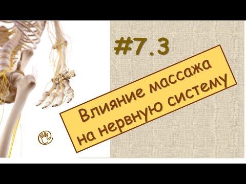 ГЛАВА 2. АНАТОМО-ФИЗИОЛОГИЧЕСКИЕ СВОЙСТВА МАССАЖА / Массаж