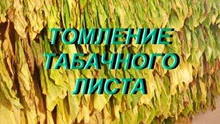 ДНЕВНИК ТАБАКОВОДА № 25 ( 7. 07. Томление табачного листа ) ТАБАК