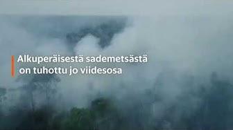 Amazonian metsäpalot huolestuttavat