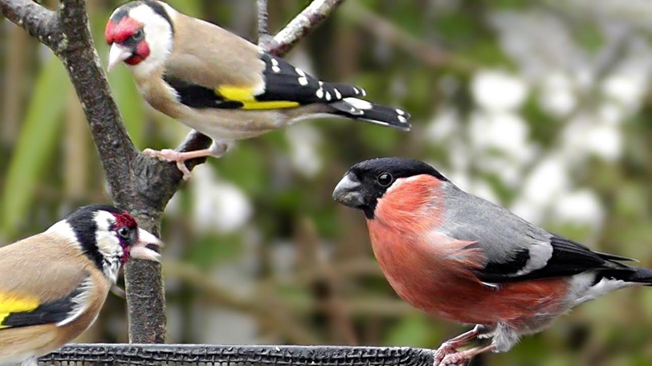 Garden Birds in The Gentle Rain Relaxing Bird Video and Sounds