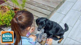 Tierspielzeug selbst gemacht    Information für Kinder   Anna und die Haustiere   Spezial