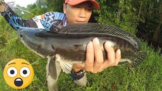 Liarnya Perlawanan  Ikan Toman/ Giant Snakehead Spot Pinggiran Hutan Sepi  #79 Mancing Liar