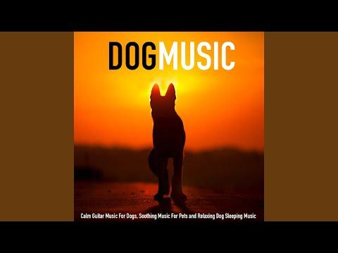 Soothing Dog Music Guitar
