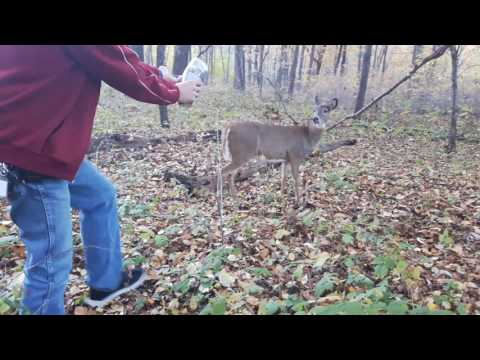 Little deer just whant to try to trust human kindness ,so awnsome thank you for watching Love nature