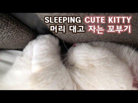 Sleeping Cat on Bed Headboard