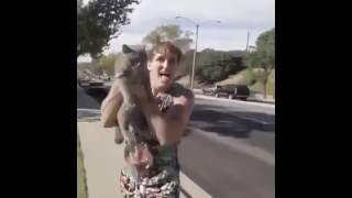 Спасение кошки с от колес автомобилей