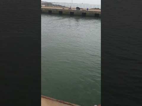 Orata al canale di fiumicino