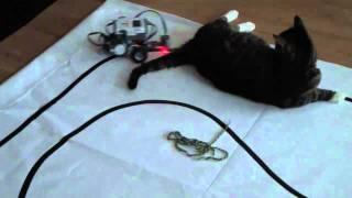 Kass ja robot