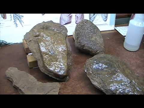 DNA certified Triassic Human Lung Changes History