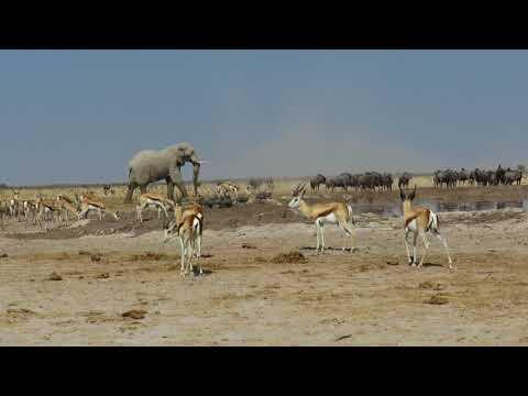 Botswana - Dawn till Dusk Safari : dawntilldusksafaris@gmail.com