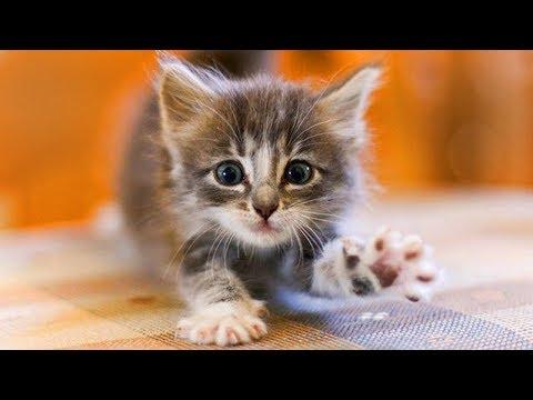 Вопрос: Как вывести блох у беременной кошки?