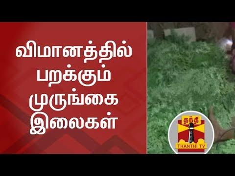 விமானத்தில் பறக்கும் முருங்கை இலைகள் | Drumstick Leaves | Drumstick | Thanthi TV